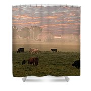 Cattle In The Fog Shower Curtain