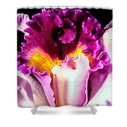 Cattleya II Shower Curtain by Christopher Holmes
