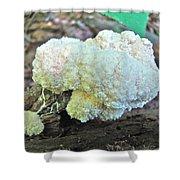 Cauliflower Mushroom On Log Shower Curtain