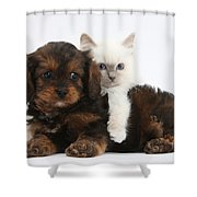 Cavapoo Pup And Blue-point Kitten Shower Curtain