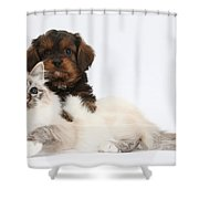Cavapoo Pup And Tabby-point Birman Cat Shower Curtain