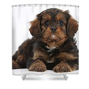 Cavapoo Pup Shower Curtain