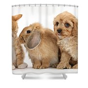 Cavapoo Pup, Rabbit And Ginger Kitten Shower Curtain by Mark Taylor