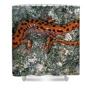 Cave Salamander Shower Curtain