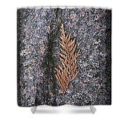 Cedar On Granite Shower Curtain