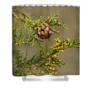 Cedar Rust Gall - Gymnosporangium Juniperi-virginianae Shower Curtain