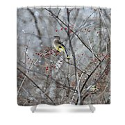Cedar Wax Wing 3 Shower Curtain