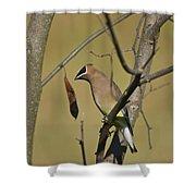 Cedar Waxwing - 2491 Shower Curtain