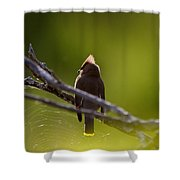 Cedar Waxwing Perched In Tree Shower Curtain