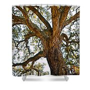 Centenarian Cork Tree Shower Curtain