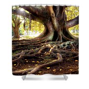 Centenarian Tree Shower Curtain