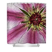 Center Of It All Shower Curtain