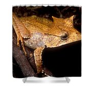 Central American Casque Headed Frog Shower Curtain