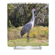 Central Florida Sandhill Crane With Oaks Shower Curtain