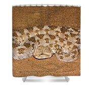 Cerastes Cerastes Horned Viper Shower Curtain
