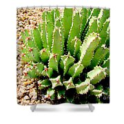 Cereus Peruvianis Cactus Shower Curtain