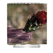 Chain Cholla Cactus Bloom Shower Curtain