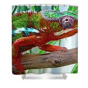 Chameleon Close Up Shower Curtain