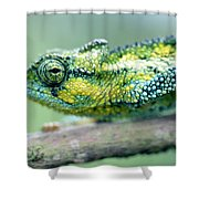 Chameleon In The Forests Of Mt Meru Shower Curtain
