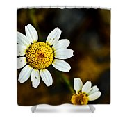 Chamomile Flower In Decay Shower Curtain