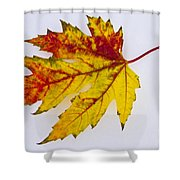 Changing Autumn Leaf In The Snow Shower Curtain