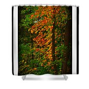 Changing Seasons Shower Curtain