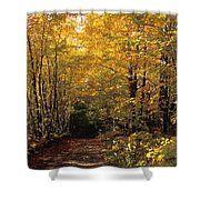 Changing Trees Shower Curtain