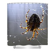 Charlottes Little Friend Shower Curtain by Bob Christopher