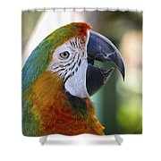 Chatty Macaw Shower Curtain