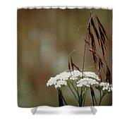 Cheatgrass And Common Yarrow Shower Curtain