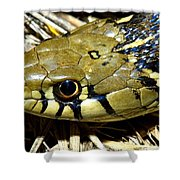 Checkered Garter Snakes Head Shower Curtain