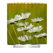 Cheerful Daisy Wildflowers Blowing In The Wind Shower Curtain