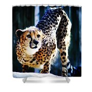 Cheeta Shower Curtain