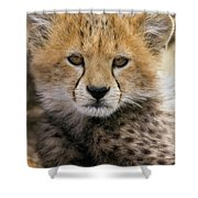 Cheetah Acinonyx Jubatus Ten To Twelve Shower Curtain