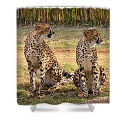 Cheetah Chat 1 Shower Curtain