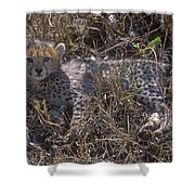 Cheetah Kitten Shower Curtain