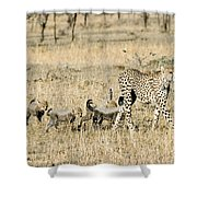 Cheetah Mother And Cubs Shower Curtain