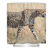 Cheetah Stepping Out Shower Curtain