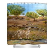 Cheetah Stops To Take A Drink Shower Curtain