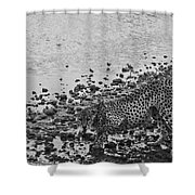 Cheetah Tip Toes For A Drink Shower Curtain