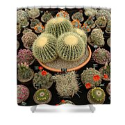 Chelsea Flower Show Cacti Display Shower Curtain