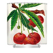 Cherries On A Branch Shower Curtain