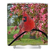 Cherry Blossom Cardinal  Shower Curtain