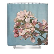 Cherry Blossoms Shower Curtain by Kim Hojnacki