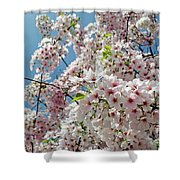 Cherry Blossoms Of The Sky Shower Curtain