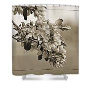 Cherry Blossoms Sepia Shower Curtain