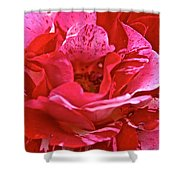 Cherry Chip Rose Petals Shower Curtain