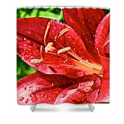 Cherry Red Lily Shower Curtain