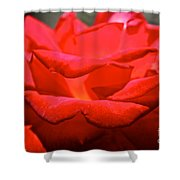 Cherry Red Rose Shower Curtain
