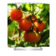 Cherry Tomatoes On The Vine Shower Curtain